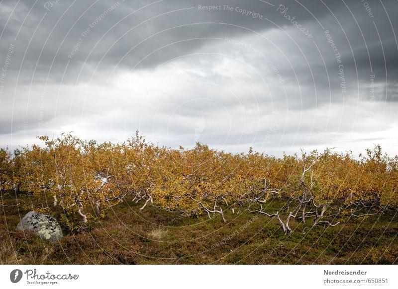 Zwergenwald Himmel Natur Pflanze Baum Einsamkeit Landschaft ruhig Wolken dunkel Wald Berge u. Gebirge Herbst klein Stimmung Regen Idylle