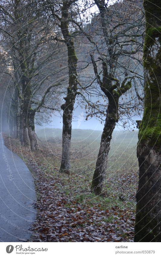 Nebel auf dem Weg zum Nebelhorn Natur Pflanze Baum Einsamkeit Landschaft kalt Wald Berge u. Gebirge Wiese Herbst Tod Holz Angst Wetter Nebel Vergänglichkeit