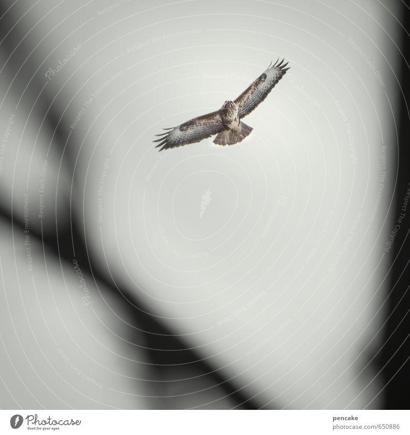 luftholen Himmel Natur Baum Landschaft Tier Luft Vogel fliegen Wildtier Urelemente Zeichen Leichtigkeit Mäusebussard