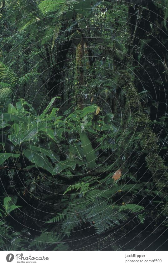 Regenwald Natur Baum Urwald
