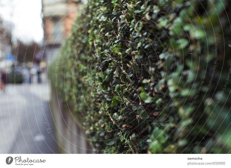 Ab durch die Hecke Natur Stadt grün Pflanze Blatt Umwelt Garten Park Stadtleben Sträucher Zaun Bürgersteig Grenze Stadtzentrum Stadtteil Grünpflanze
