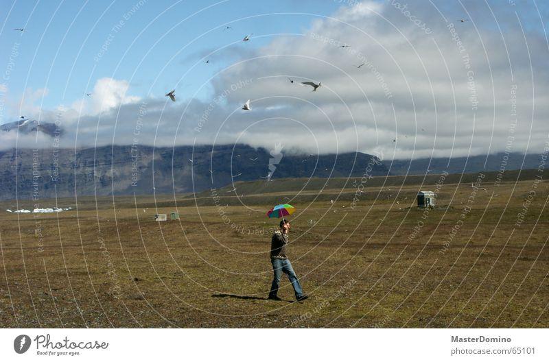 birds vs. umbrella Natur Himmel grün blau Wolken Wiese Berge u. Gebirge Landschaft Vogel wandern gehen fliegen Spaziergang Schutz Regenschirm Island