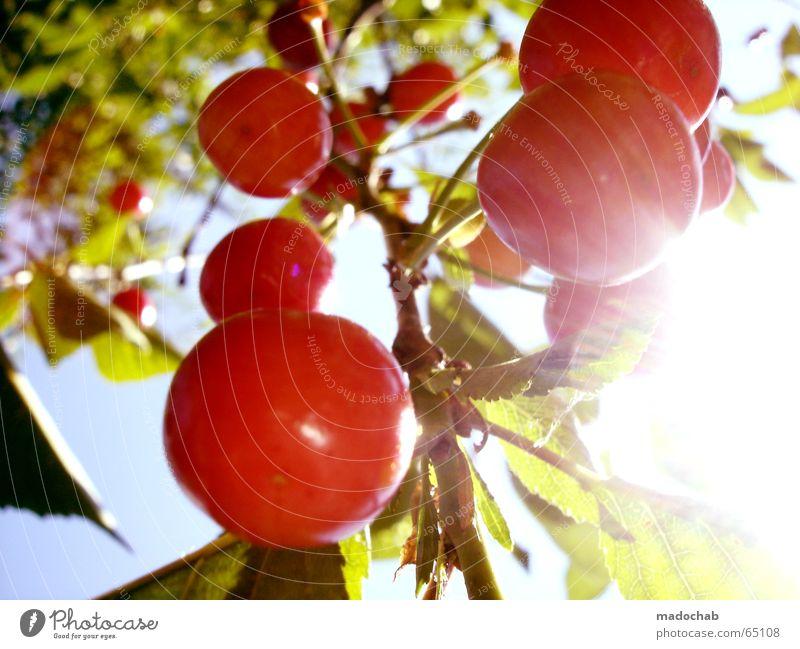 MIT DEN KIRSCHEN INS HAUS FALLEN | frucht vitamine gesundheit Himmel Natur grün rot Pflanze Sonne Sommer Freude Erholung Ernährung Leben träumen Gesundheit Kraft Frucht Herz
