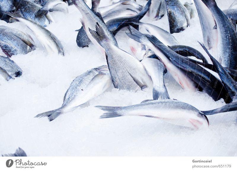 Icediving Lebensmittel Fisch frisch blau Meeresfisch Seefisch Eis kühlen Sommer fangfrisch Markt Farbfoto Nahaufnahme Textfreiraum unten