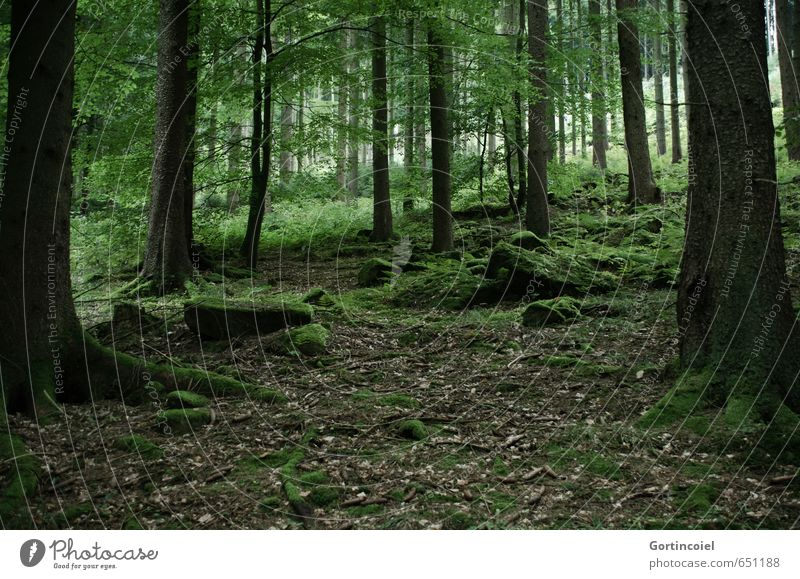 Wald Natur grün Baum Landschaft Blatt dunkel Wald Herbst Baumstamm Moos Laubbaum Moosteppich