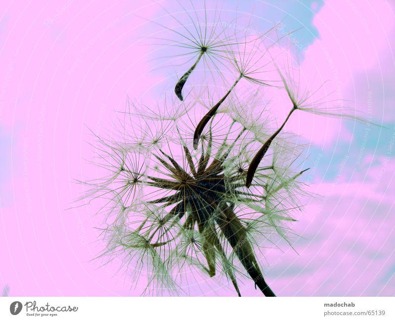 BOMBING PEACE INTO LOVELY PINK | gruss liebe gay natur sky Himmel Natur blau grün Pflanze Blume Farbe Wolken ruhig Ferne Gefühle Stil träumen Zufriedenheit rosa