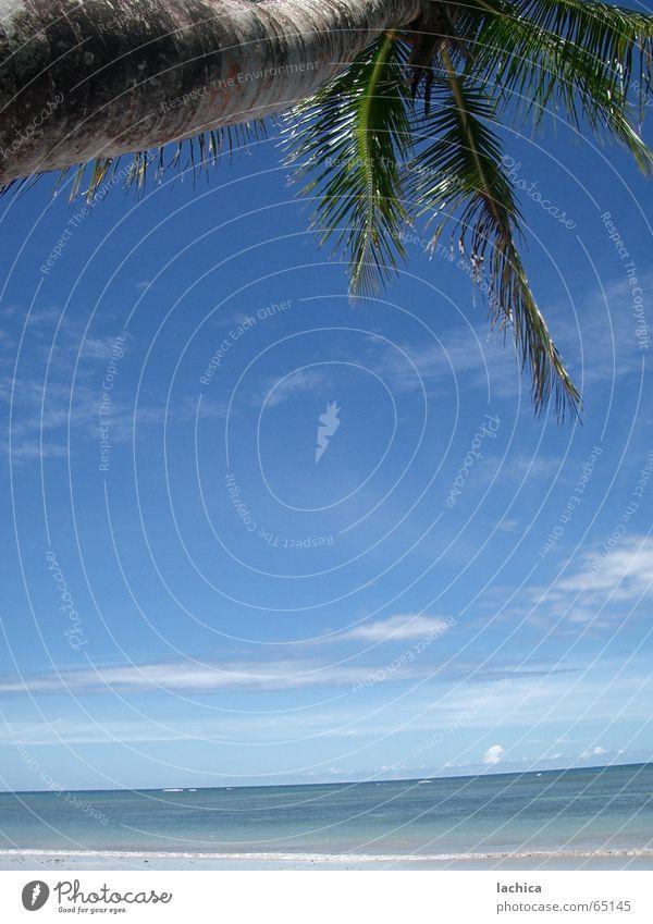 Alles Palme Wasser Himmel Baum Meer blau Sommer Strand Ferien & Urlaub & Reisen ruhig Blatt Wolken Ferne Erholung Freiheit Holz Wellen
