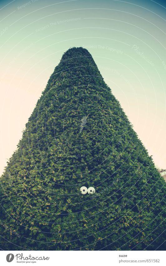 Hector, der Ritter ohne Furcht und Tadel Lifestyle Stil Freizeit & Hobby Umwelt Natur Himmel Pflanze Baum Sträucher beobachten lustig verrückt grün Neugier