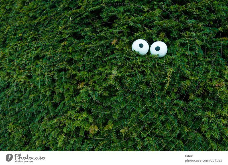 Spion Lifestyle Stil Freizeit & Hobby Auge Umwelt Natur Pflanze Baum Sträucher lustig grün nachhaltig Umweltschutz Wachstum Hecke Tarnung Versteck Spitzel