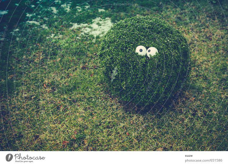 Da ist doch was im Busch Natur grün Pflanze Freude Umwelt Auge Wiese lustig Stil klein Garten Lifestyle Sträucher Wachstum verrückt beobachten