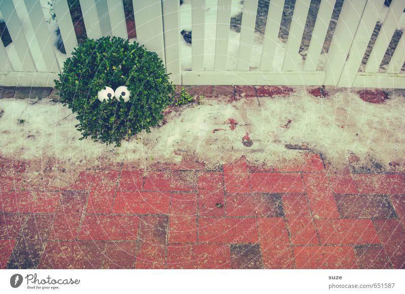 Sehen was läuft Natur grün Pflanze rot Winter Umwelt Schnee lustig Stil klein Lifestyle Sträucher Wachstum verrückt beobachten niedlich