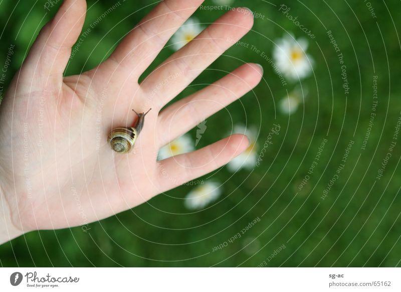 Tuchfühlung Natur Hand Tier Finger nah Kontakt Gänseblümchen Schnecke Fühler Reptil Zwitter Schneckenhaus