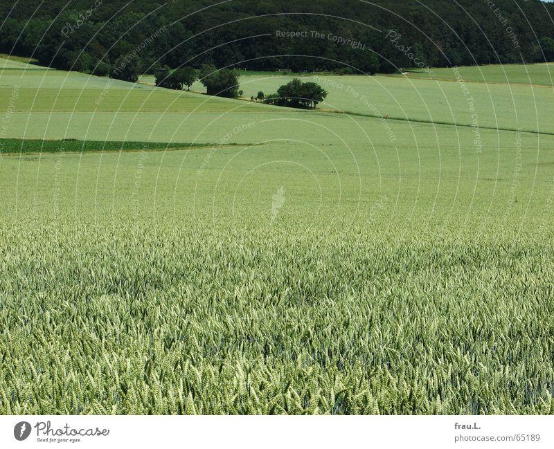 Waldecke Degersen Natur grün Sommer Baum Landschaft ruhig Wege & Pfade Feld Ecke bleich wenige Weizen reduzieren Mittag Niedersachsen