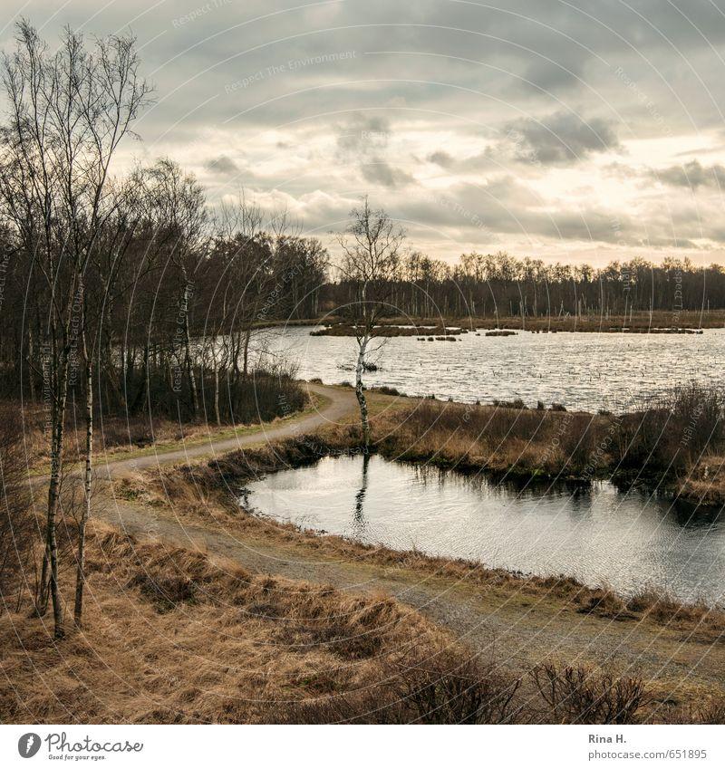 Spät II Umwelt Natur Landschaft Wolken Winter Pflanze Baum Gras Sträucher Birke Moor Sumpf See dunkel trist Quadrat dramatisch Stimmung Traurigkeit Farbfoto