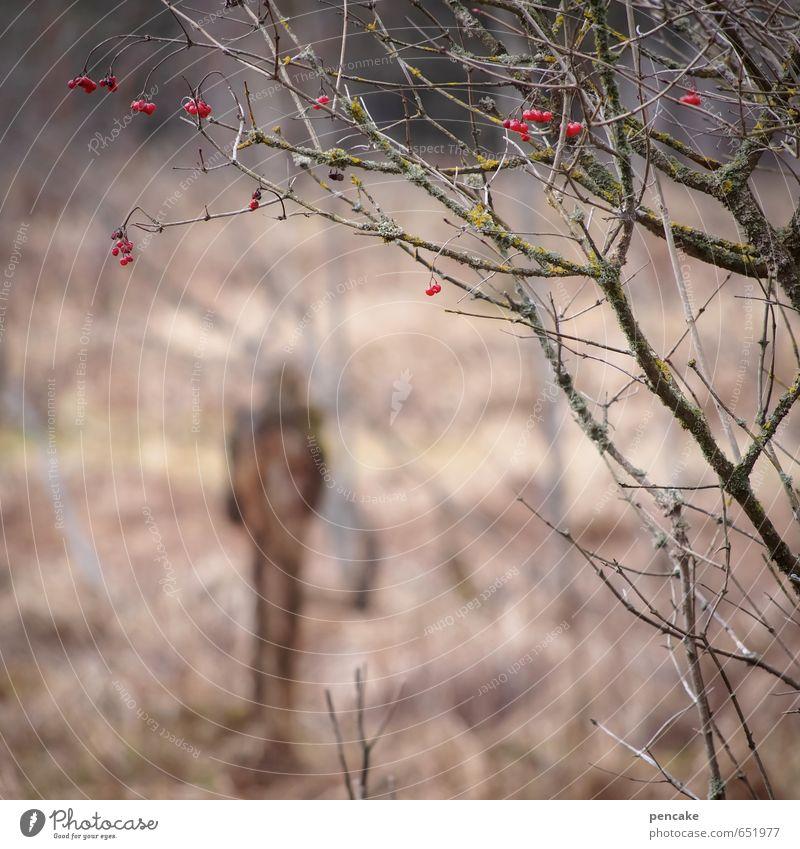gestaltbar Natur Landschaft Winter Sträucher Wildpflanze Moor Sumpf Zeichen dunkel Mensch Beeren rot unheimlich Erscheinung Volksglaube Wahrsagerei Zwerg Elfe