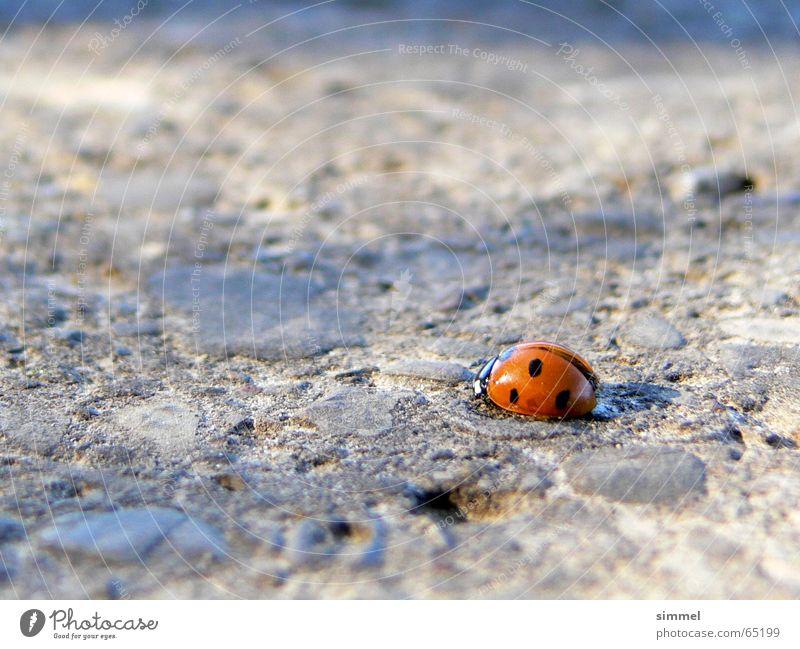 Einsames Glück III Einsamkeit Straße Glück Asphalt Insekt Symbole & Metaphern Marienkäfer verwundbar Glücksbringer punktuell