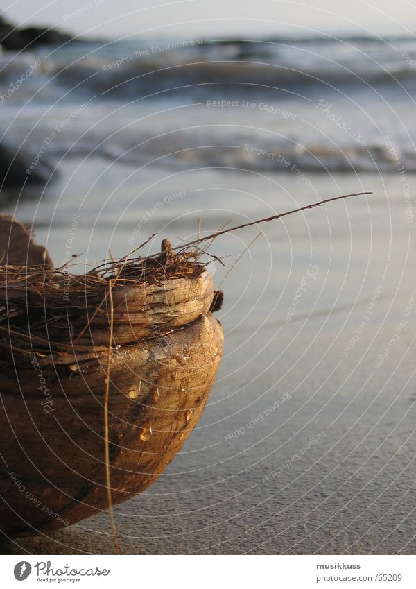 Gestrandet Wasser Meer Sommer Strand ruhig Einsamkeit Erholung Kokosnuss