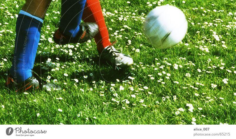 zweikampf Mann blau grün weiß rot Blume Spielen Gras Schuhe laufen fliegen Fußball Ball Rasen Strümpfe kämpfen