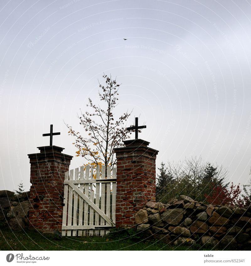 Himmelspforte Wolken Herbst Pflanze Baum Gras Garten Dorf Ruine Tür Tor Vogel 1 Tier Stein Holz Metall Zeichen Kreuz alt fliegen stehen dunkel grau schwarz