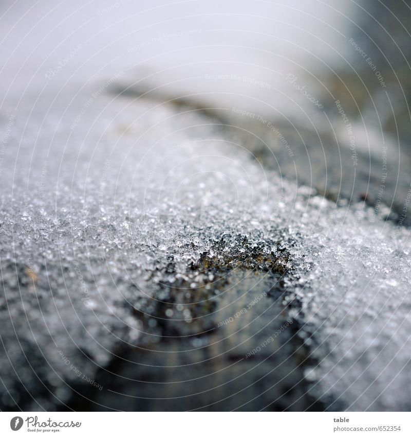 Tauwetter Natur alt Pflanze Wasser weiß ruhig Winter dunkel schwarz kalt Umwelt Schnee Holz grau braun glänzend