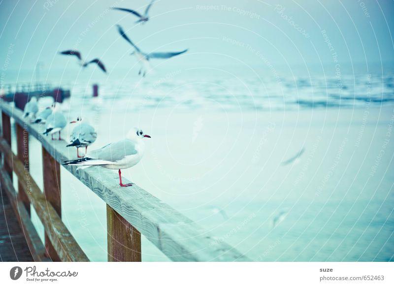 Rüganer Winter Himmel Natur blau Meer Tier kalt Umwelt klein Holz Horizont Luft Vogel Eis fliegen Wildtier warten