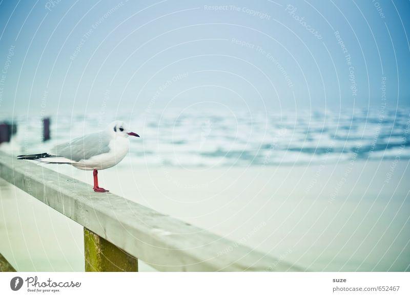 Nu kiek dir ma den Jammalappm an ... ruhig Meer Winter Umwelt Natur Tier Himmel Horizont Küste Ostsee Wildtier Vogel Holz stehen warten kalt klein lustig