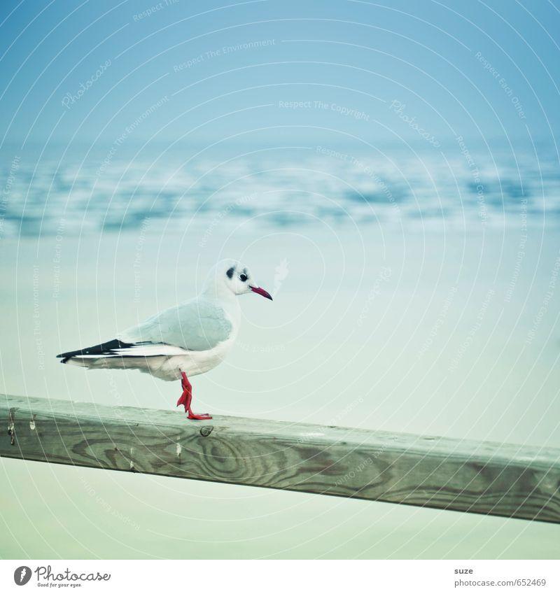 Kalte Füße Himmel Natur blau weiß Meer ruhig Tier Winter kalt Umwelt lustig klein Holz Horizont Vogel Wildtier