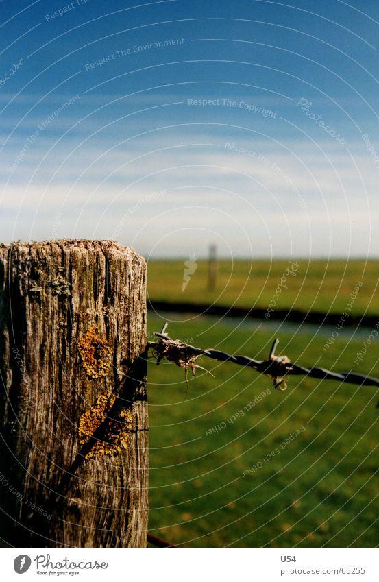 schön anzuschauen.. Sommer Wiese Gras Zaun Stacheldraht Ostfriesland