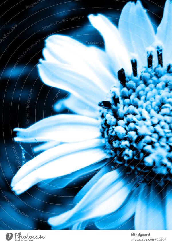 Blue Flower Natur Blüte Duplex Mondschein kalt Beleuchtung zyan blue flower blau Pollen Samen trist Farbe