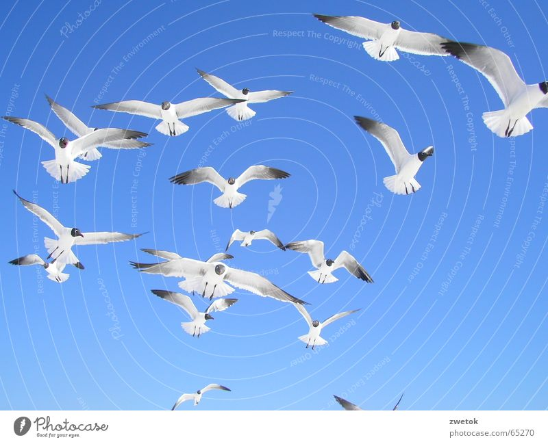 MoevenFlorida Himmel Meer blau Strand Vogel