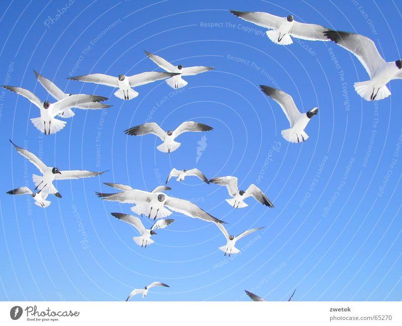 MoevenFlorida Meer Vogel Strand möve möven Himmel blau