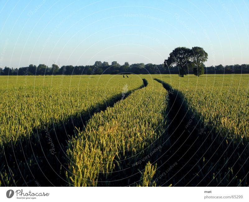 Dieser Weg Horizont Ferne Baum grün Unendlichkeit tief Wege & Pfade Getreide blau Spuren Freiheit Himmel Windkraftanlage Amerika Landschaft Natur