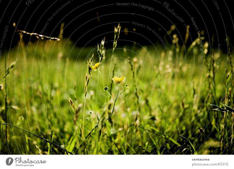 ...wenn man sich auf einer Wiese wälzt... Blume Sommer Erholung Gras See Erde liegen Insekt