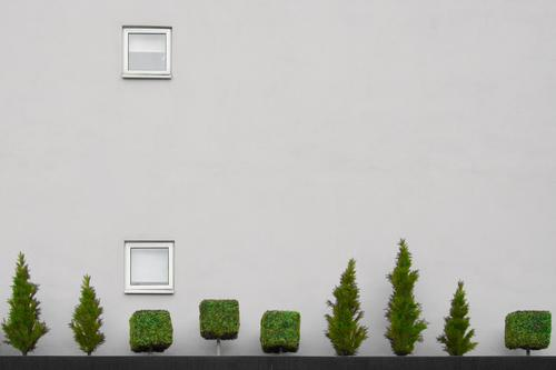 Treescape 1 Baum Beton Fenster Wand grau grün weiß Baumkrone schöne aussicht ein platz im grünen traum vom baum tree concrete window grey white Stadt tree line