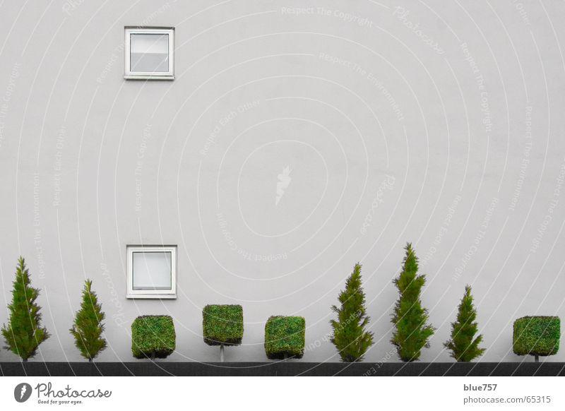 Treescape 1 weiß Baum grün Stadt Wand Fenster grau Mauer Beton Baumkrone