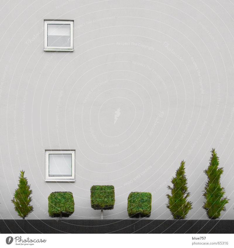 Treescape 2 weiß Baum grün Stadt Wand Fenster grau Mauer Beton Baumkrone