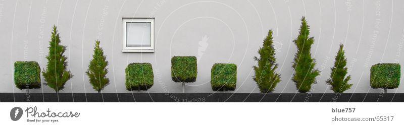 Treescape 3 Baum Beton Fenster Wand grau grün weiß Baumkrone schöne aussicht ein platz im grünen traum vom baum tree concrete window grey white Stadt tree line