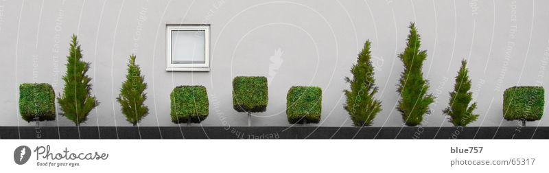 Treescape 3 weiß Baum grün Stadt Wand Fenster grau Mauer Beton Baumkrone Pflanze