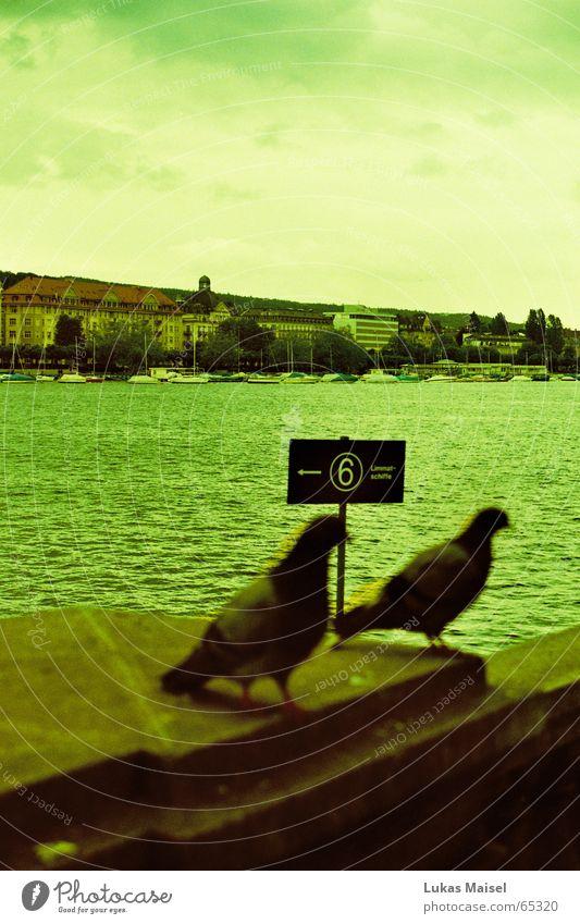*taube taube See Taube Zürich See Vogel Schloss Bellevue Wellen Steg Wasserfahrzeug Wolken Gurren Hotel Tiefenschärfe Cross Processing Unschärfe grün