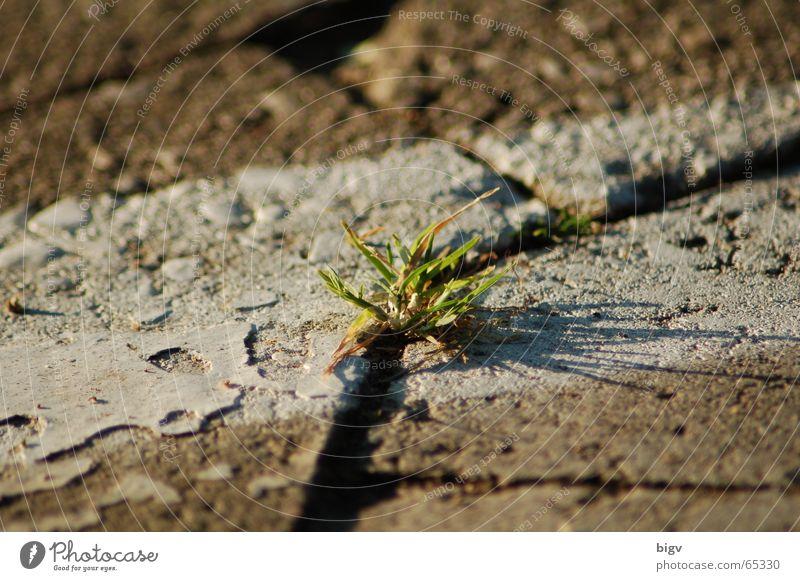 Leben im Stein Gras Schilder & Markierungen grau grün Einsamkeit Mittelpunkt Parkplatz fremd Pflastersteine Licht Schatten
