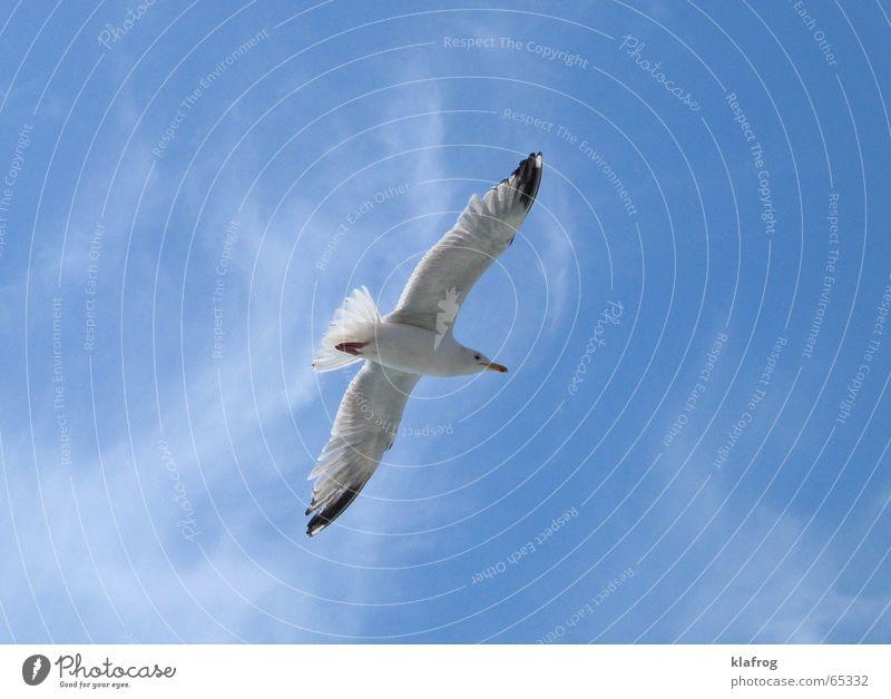 Bye bye, Sommer Möwe Silhouette Flügel Küste Ferien & Urlaub & Reisen Meer Himmel Neugier schön Vogel frei Freiheit Wind Profil fliegen blau Feder Lachmöwe sky