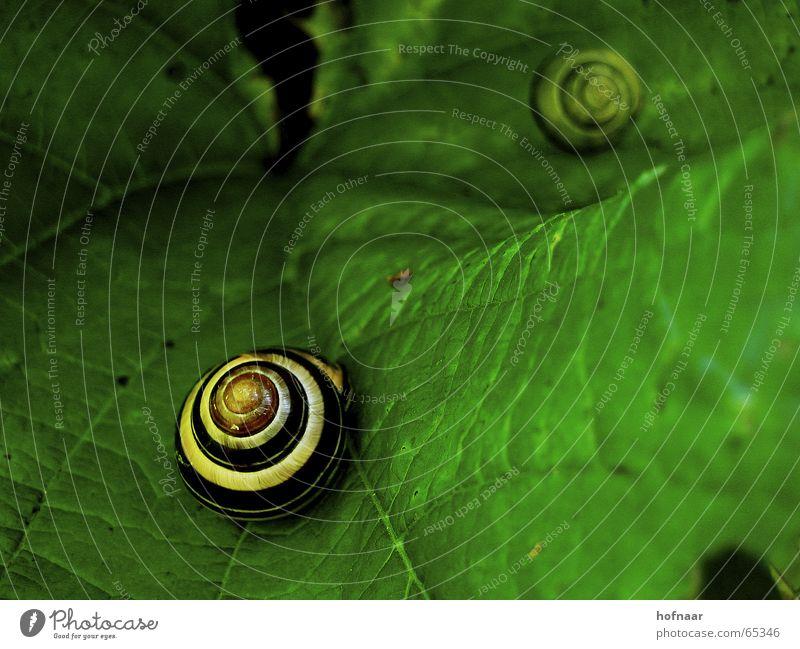 schnecke@blattgrün.de Sommer Winter Blatt Haus schwarz gelb Herbst Frühling Kreis Schnecke Gefäße