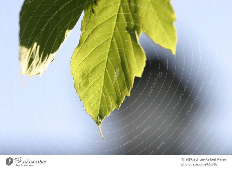 grün grün grün blüht der enzian Himmel Natur blau schön Baum Blatt Haus Frühling Wachstum Blühend Schornstein Blattadern Blattgrün aufwachen gedeihen