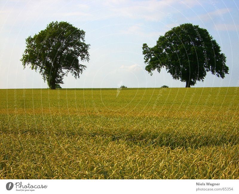 Zwillingspaar Baum Sommer Wiese Feld Korn
