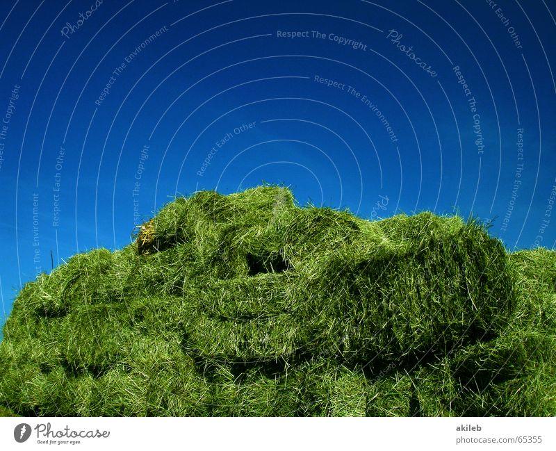Ein Haufen Arbeit Sommer grün gelb Landwirtschaft Verlauf heiß Physik Arbeit & Erwerbstätigkeit Himmel blau Amerika Wärme Wetter sky