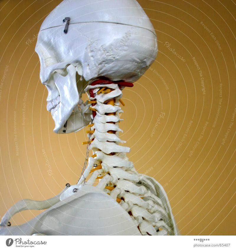 Puzzle für Fortgeschrittene Mensch Tod Fröhlichkeit Gesundheitswesen Zähne Ende dünn Baugerüst Skelett Haken Schädel Nacken Delikt Wirbelsäule Hinterkopf