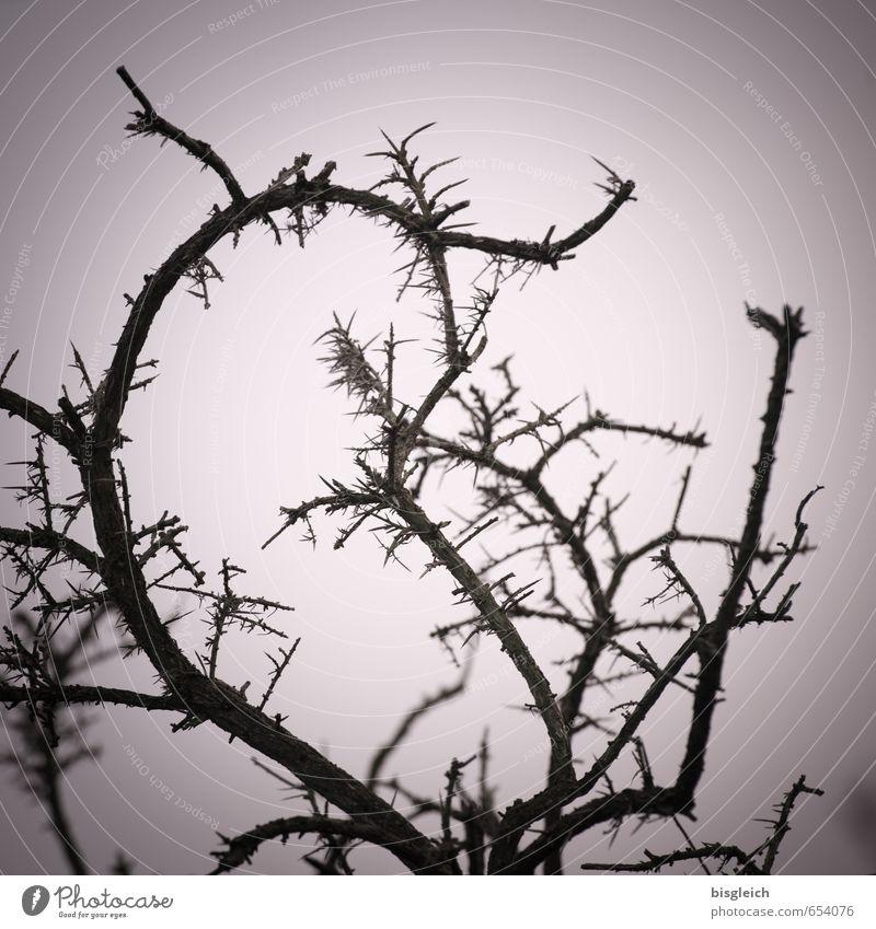 Sylt X Himmel Natur Pflanze schwarz Umwelt Deutschland rosa Sträucher Europa Nordsee Sylt