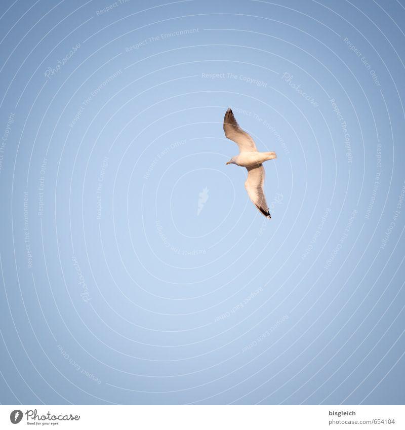 Sylt IX Ferien & Urlaub & Reisen Strand Meer Insel Himmel Deutschland Europa Tier Vogel Möwe 1 fliegen blau Freiheit Farbfoto Außenaufnahme Menschenleer
