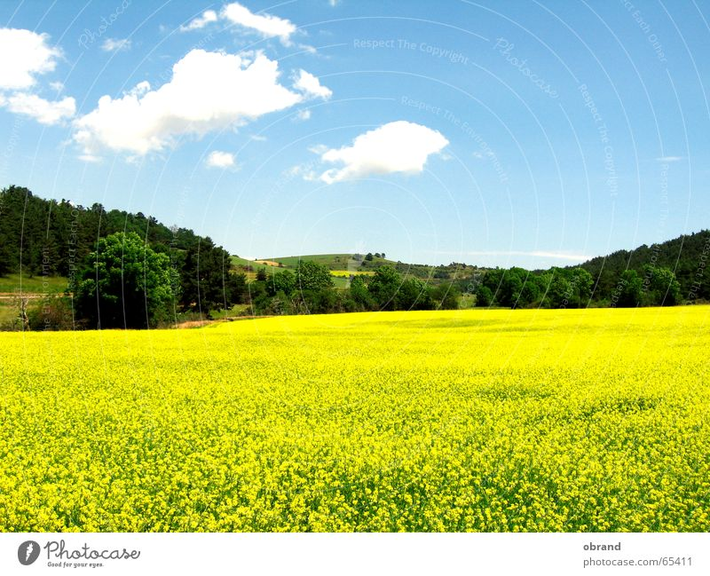 Rapsody Rapsfeld ähnlich Südfrankreich Windows XP