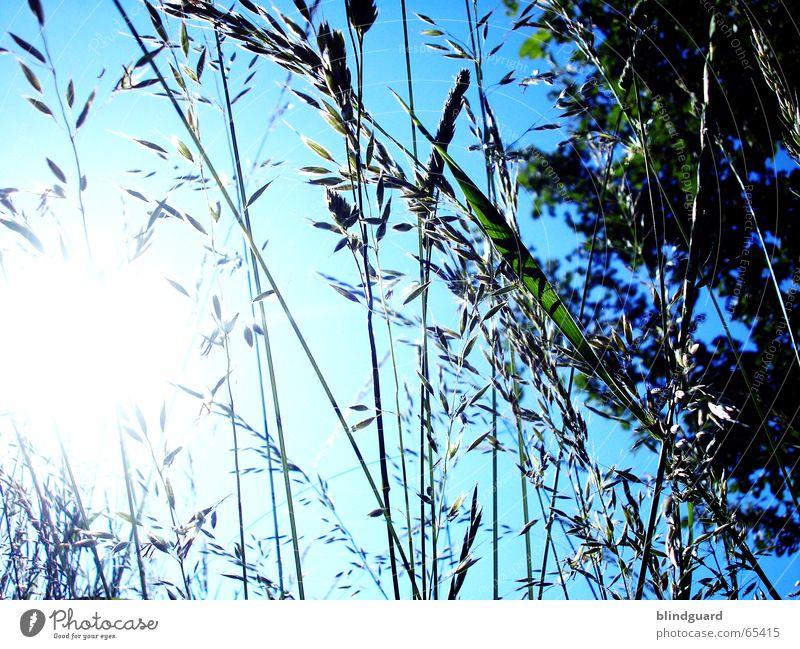 Grasvorhang Himmel Sonne grün blau Gras Sträucher unten blenden Feldrand